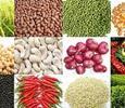 10 tháng năm 2017, giá trị xuất khẩu các mặt hàng nông sản chính ước đạt 15,62 tỷ USD